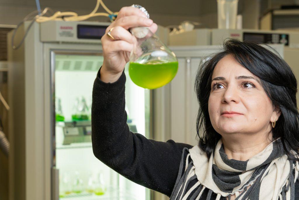 Yagut Allahverdiyeva-Rinne laboratoriossa